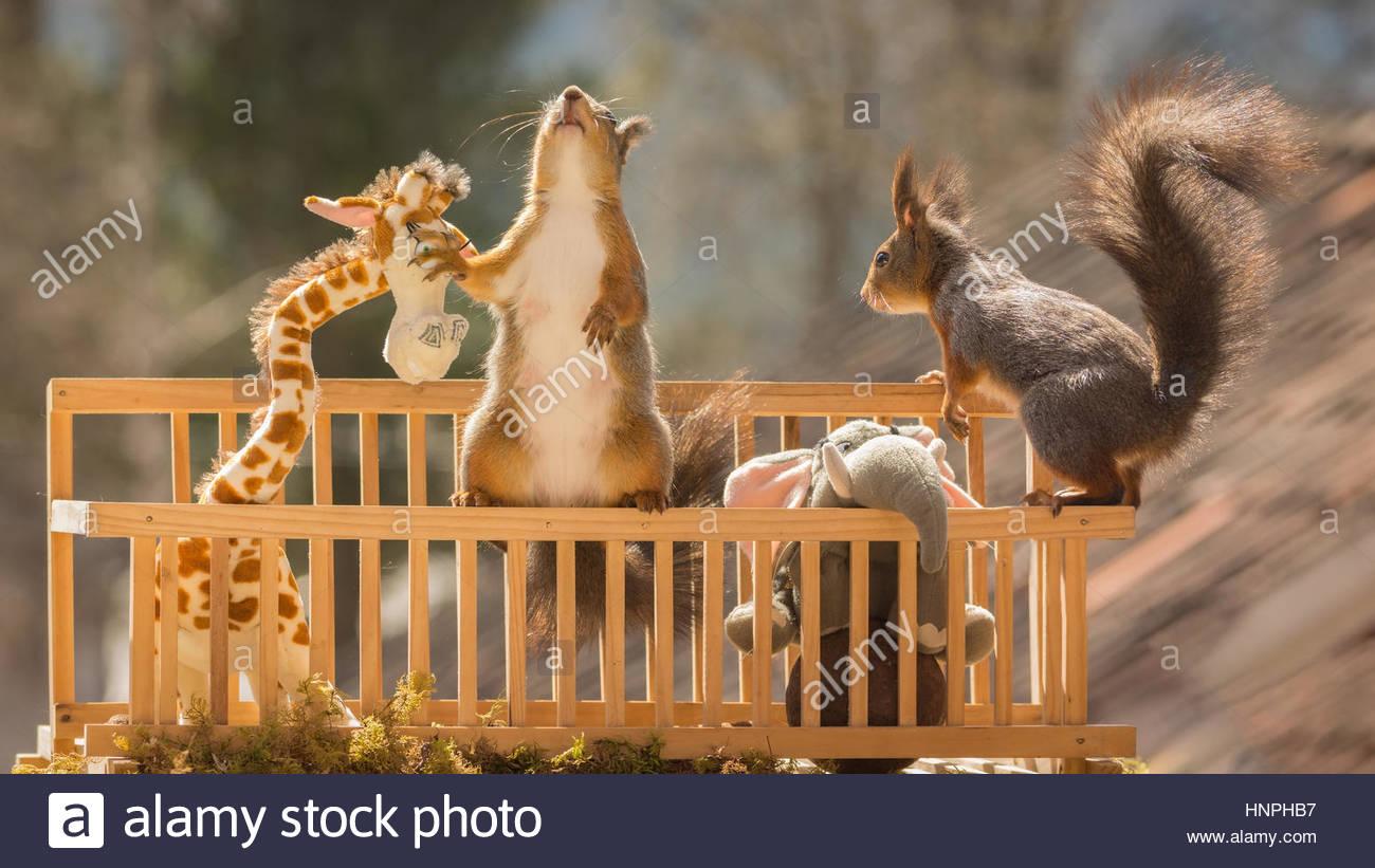 Eichhörnchen in einer Box mit einem Elefanten und Giraffen Stockbild