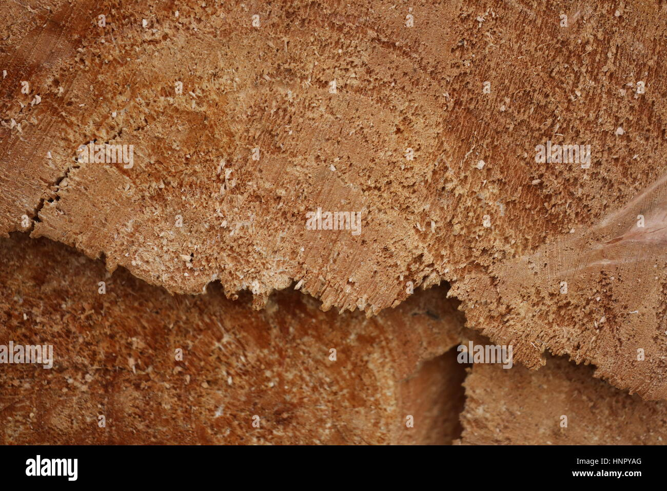 Holz ringporig Stockbild