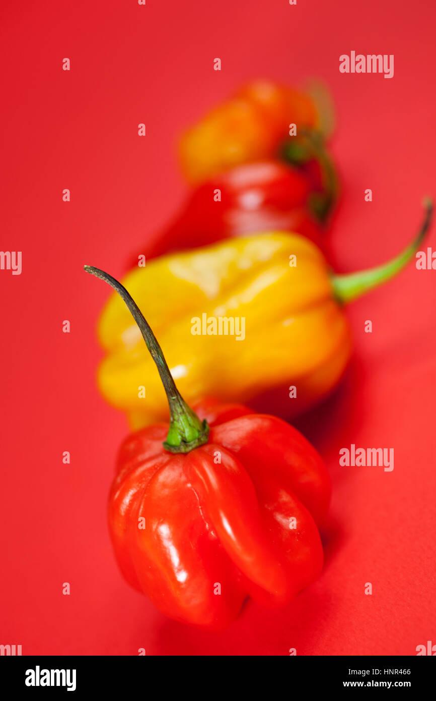 Serie von Mini-Peperoni auf rotem Grund Stockbild