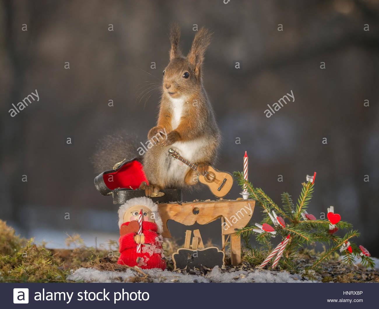 Eichhörnchen stehend mit einer Gitarre, Weihnachten Puppe und Kerzen ...