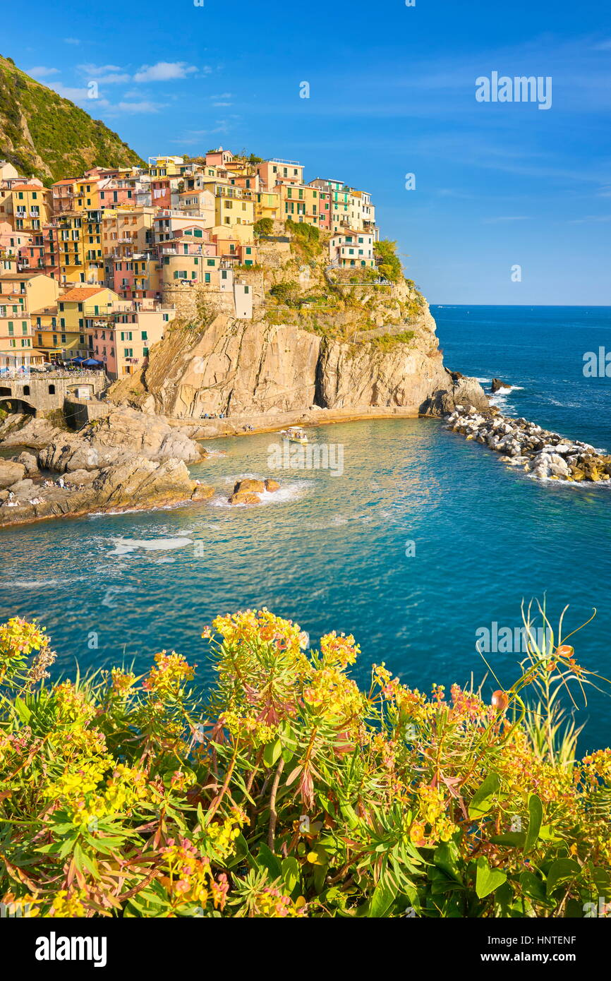 Manarola, Cinque Terre, Ligurien, Italien Stockbild