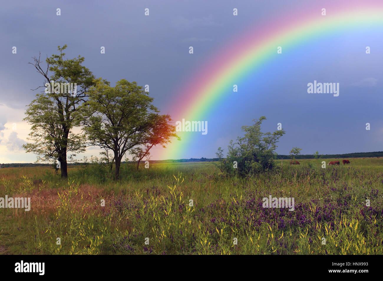 Regenbogen über Ackerland Stockbild