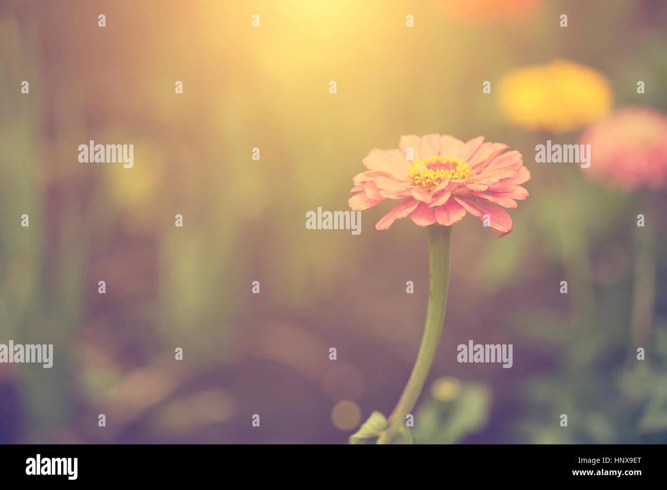 Wildblumen im Sonnenuntergang Stockbild
