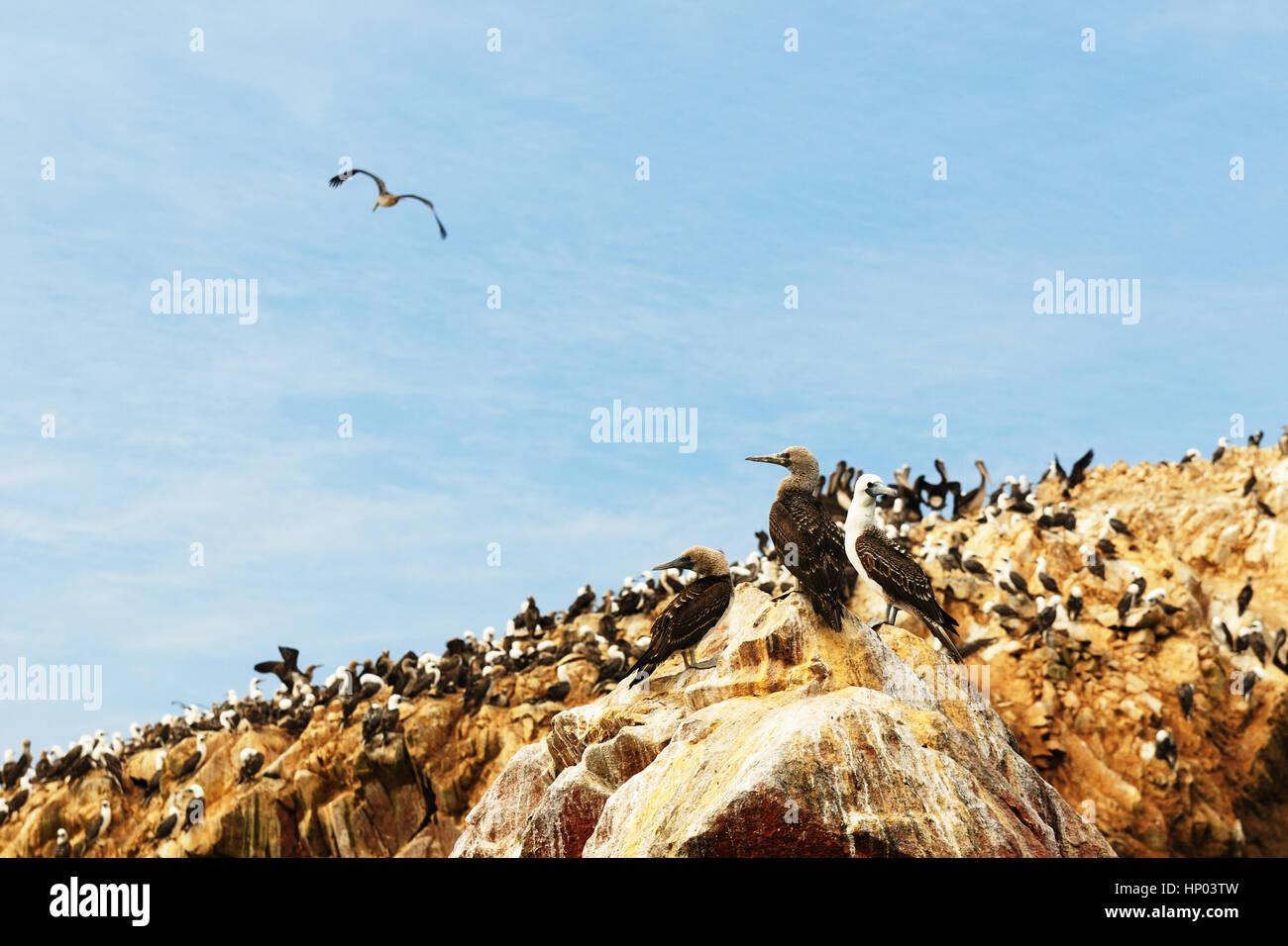 Ica stone stockfotos ica stone bilder alamy for Wildparks in der nahe