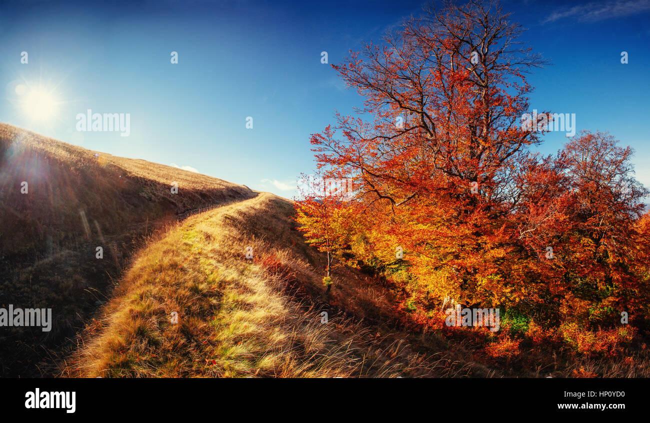 Felsmassiv in den Karpaten. Stockbild