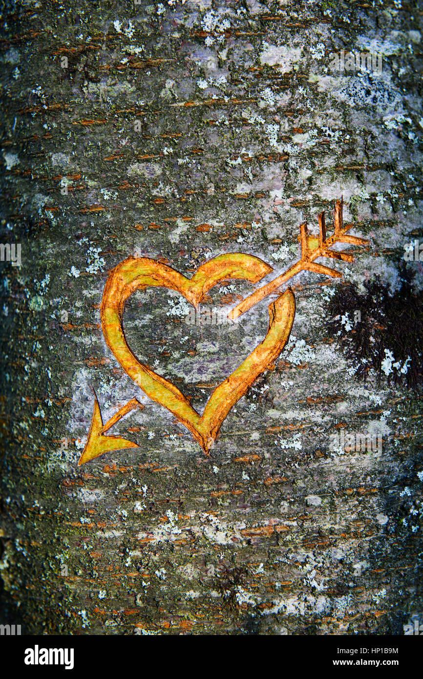 Herz Und Pfeil In Rinde Der Kirschbaum Schneiden Dies Wurde Wahrend