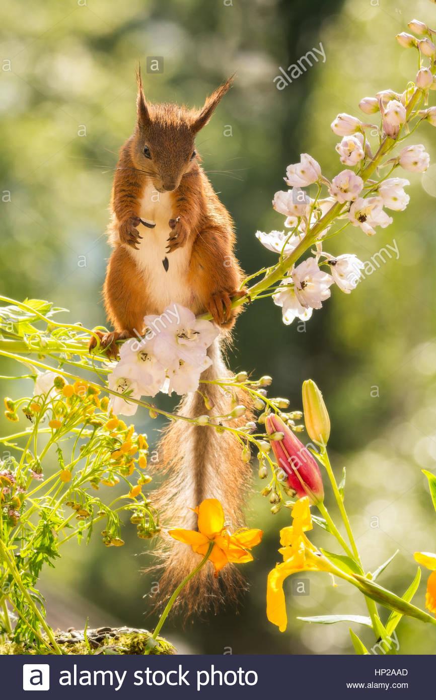 Nahaufnahme von einem Eichhörnchen zu Fuß auf einer Blume Zweig nach ...