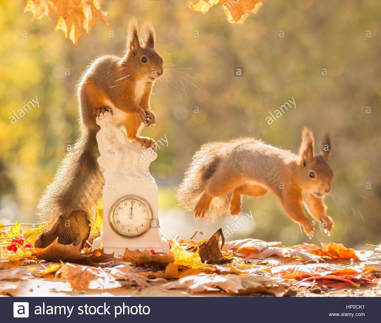 Squirrel Running Away Stockfotos & Squirrel Running Away Bilder ...
