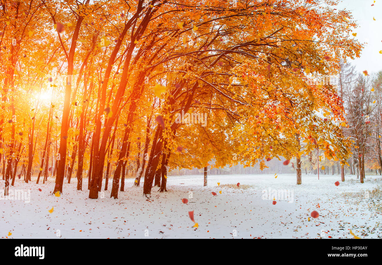 Licht bricht durch das Herbstlaub der Bäume Stockbild