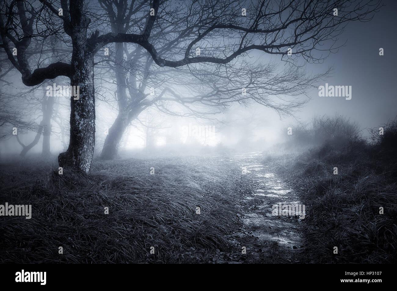 Pfad im Wald dunkel und gruselig Stockbild