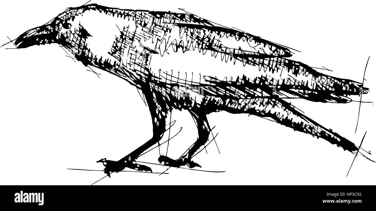 Hand gezeichnet Stift Skizze Vektor-Illustration der Krähe Vektor ...