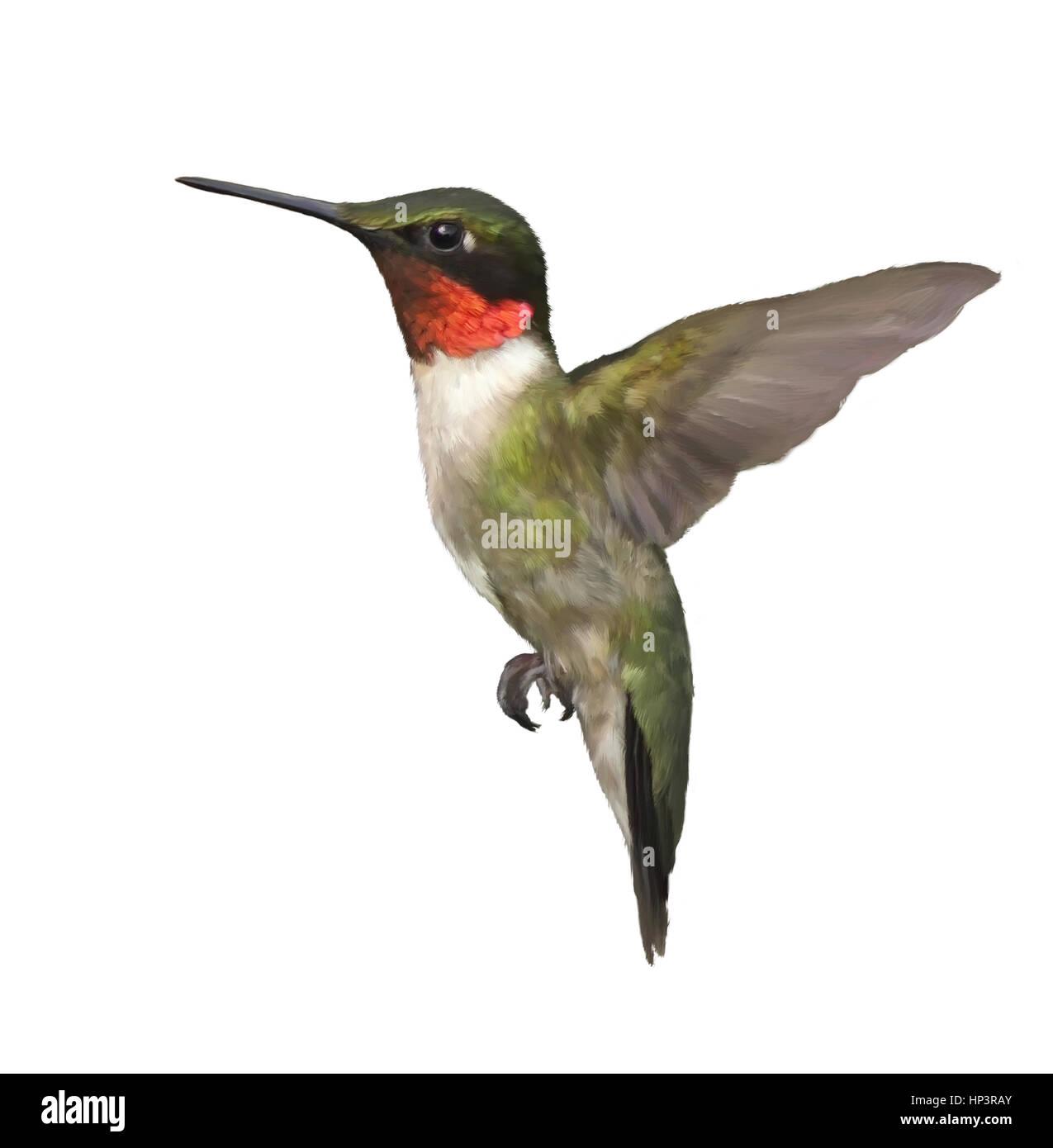 Groß Süsse Kolibri Malvorlagen Zeitgenössisch ...