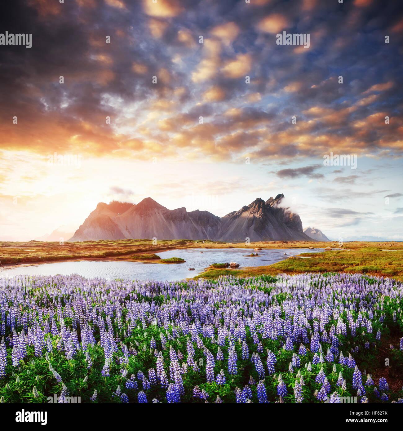 Die malerische Landschaft von Wäldern und Bergen Island Stockbild