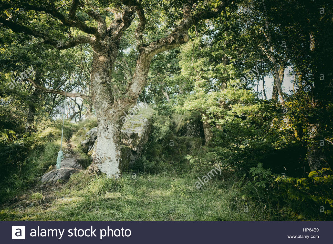 old deciduous forest stockfotos old deciduous forest bilder alamy. Black Bedroom Furniture Sets. Home Design Ideas
