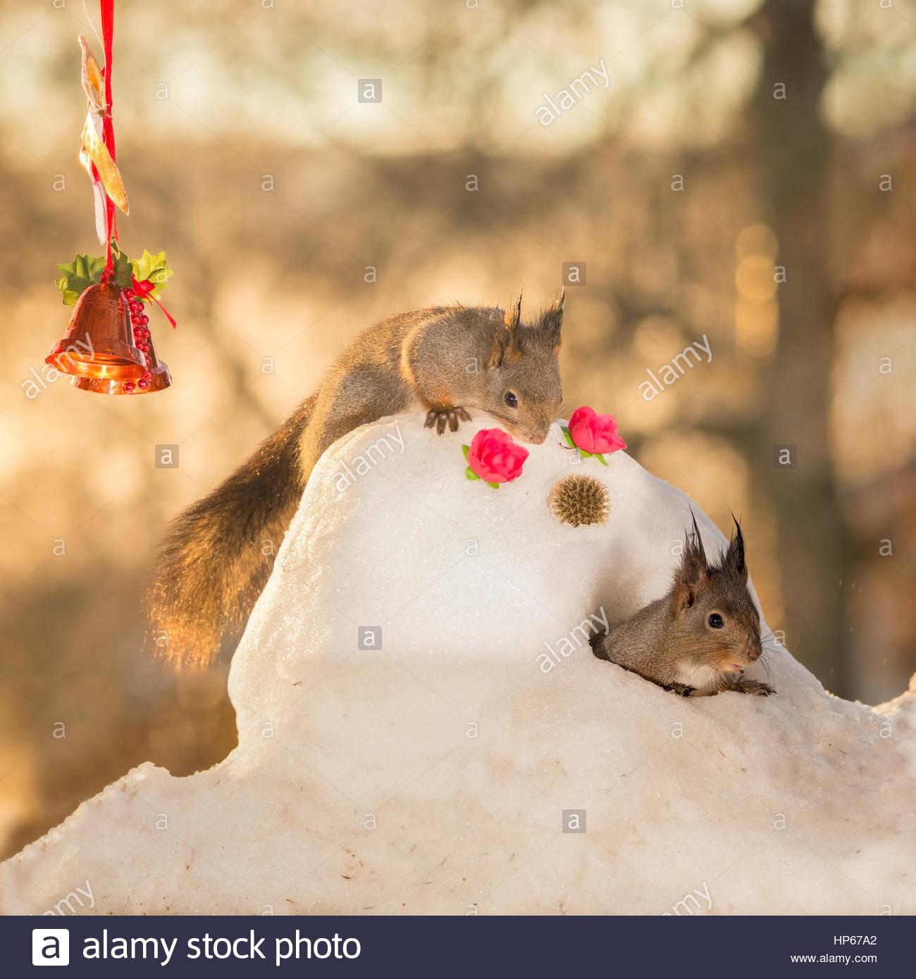 Eichhörnchen stehend auf Schneemann blickte auf ein anderes ...