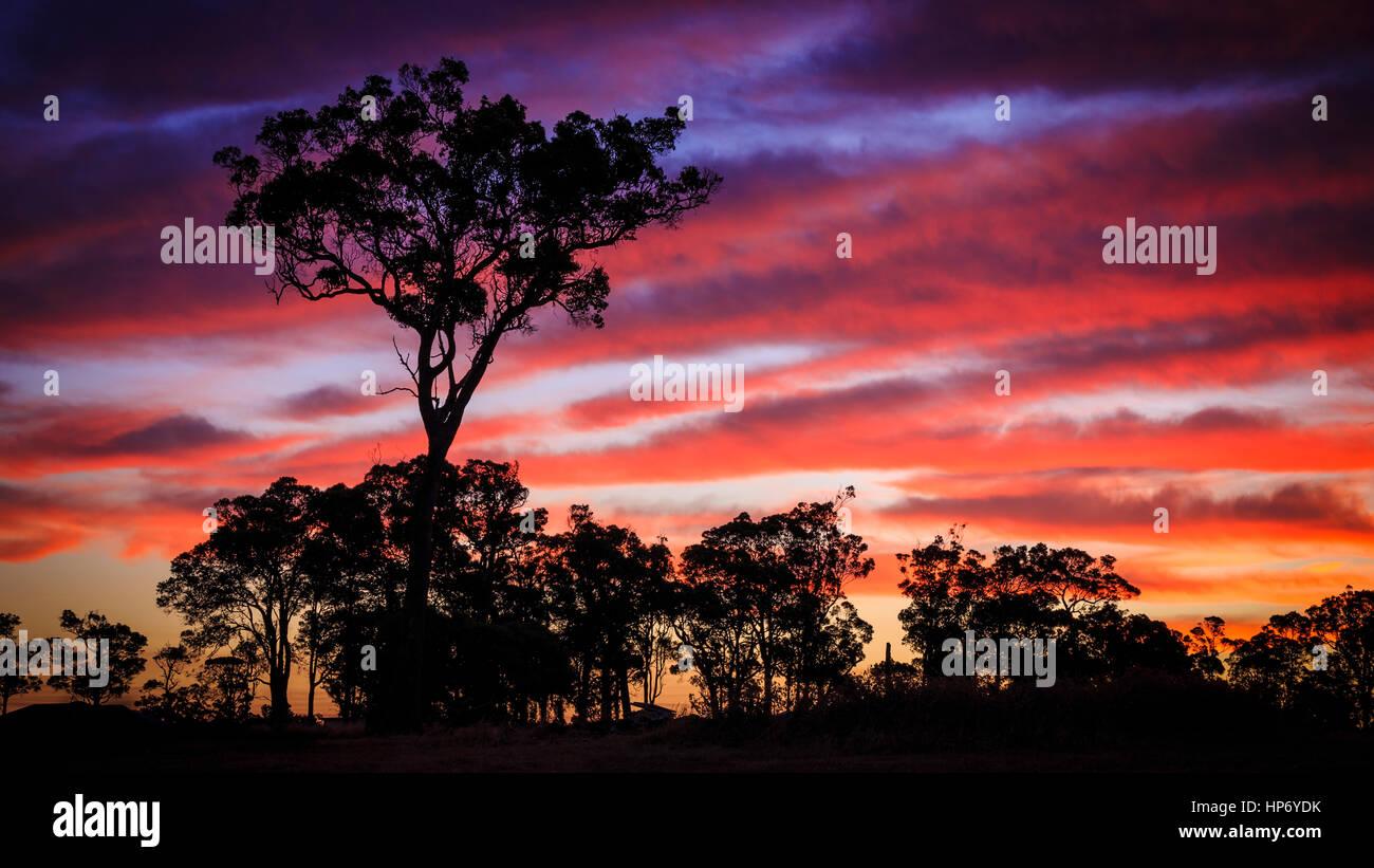 Sonnenuntergang Baum Stockbild