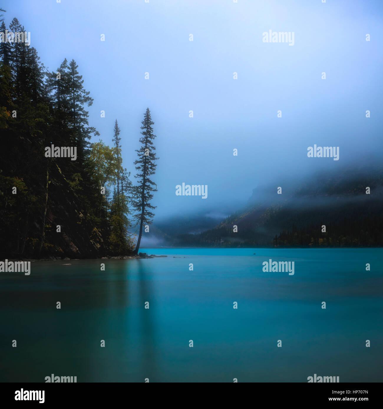 Einsamer Baum am Ufer des Kinney Lake, Mt Robson National Park, Britisch-Kolumbien, Kanada Stockbild