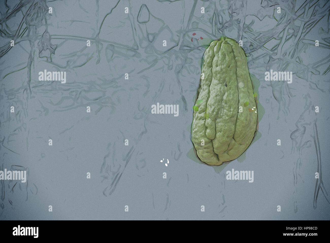 Gemüse-Plantage in Vietnam. Momordica Charantia oft bitter Melone ...