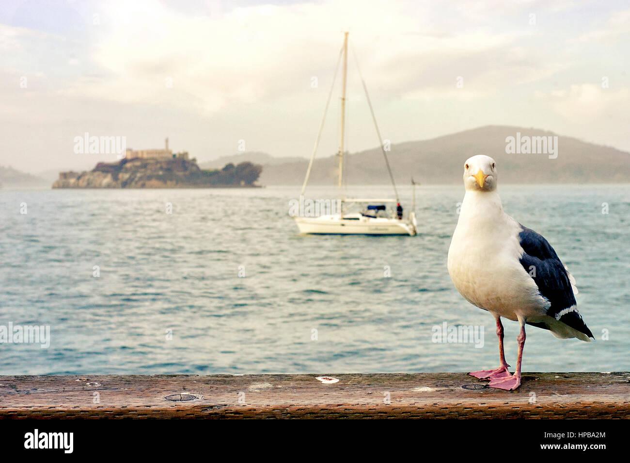 Eine Möwe, Segelboot und einen Blick auf Alcatraz Island. Stockbild
