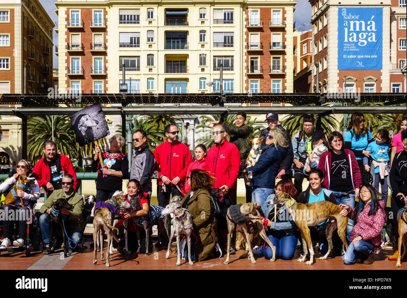 Greyhound Protest Galgos Espanol Galgos Español in Malaga, Spanien. 5. Februar 2017 Stockbild