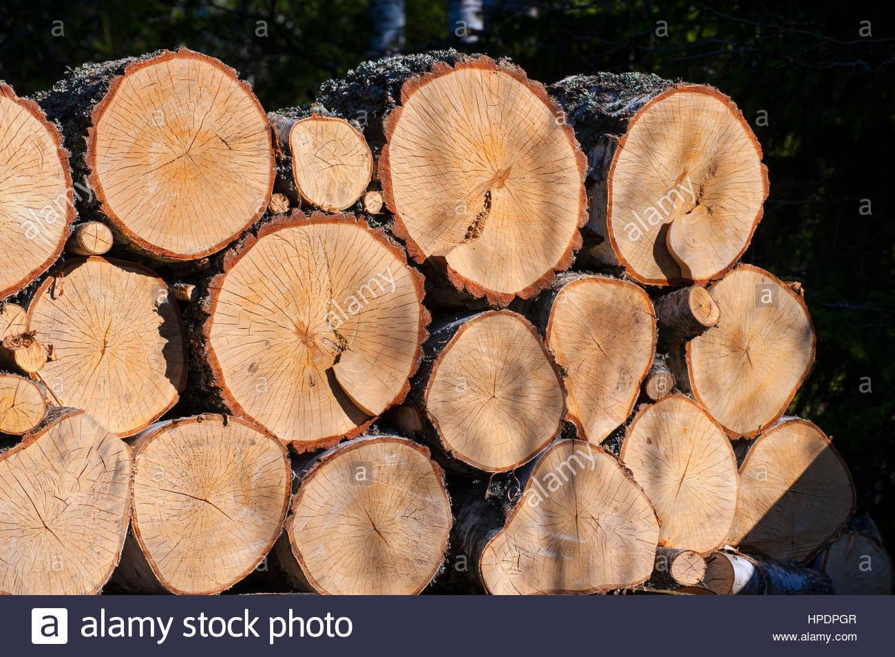 wood logs switzerland stockfotos wood logs switzerland bilder alamy. Black Bedroom Furniture Sets. Home Design Ideas