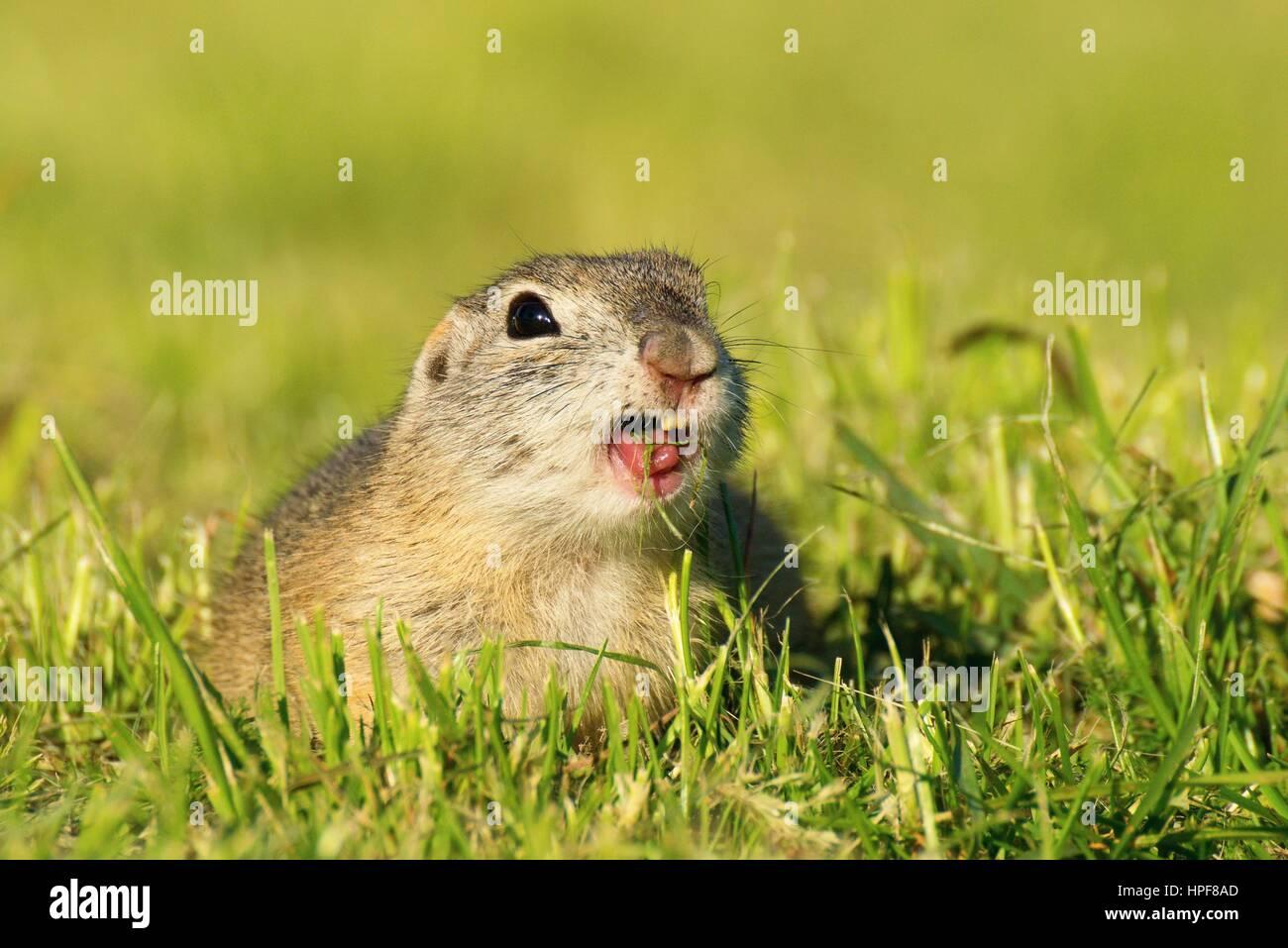 Wunderbar Mäuse Kauten Drähte Durch Fotos - Der Schaltplan - greigo.com