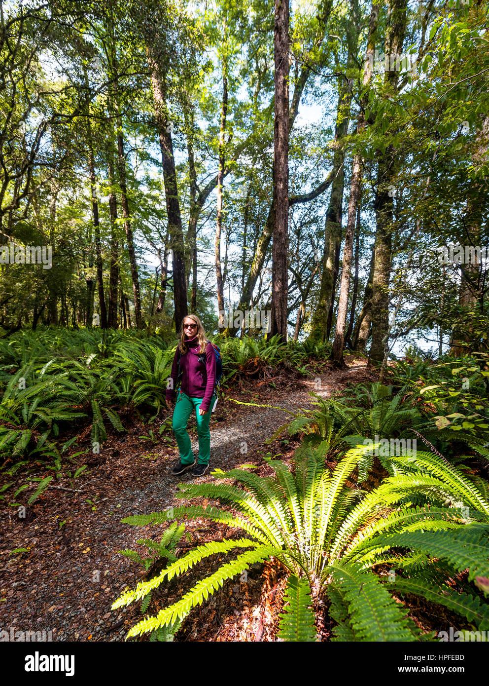 Wanderer zu Fuß durch Wald mit Baumfarnen, Abel Tasman National Park, Southland, Neuseeland Stockbild