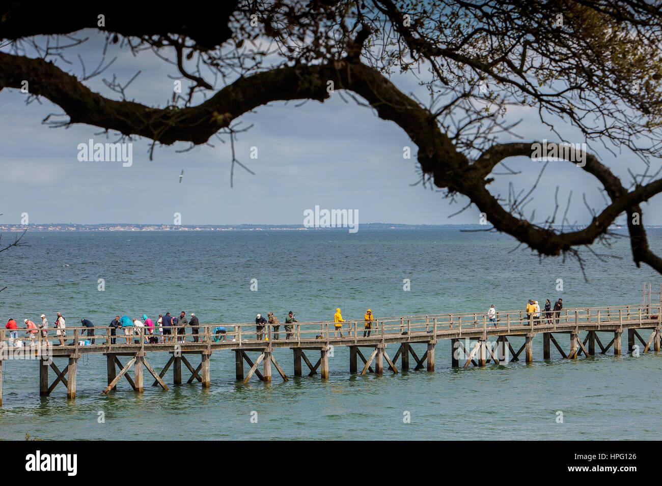 Holzsteg Le Bois De La Chaise Insel Noirmoutier Atlantik Kuste Vendee Provinz Frankreich