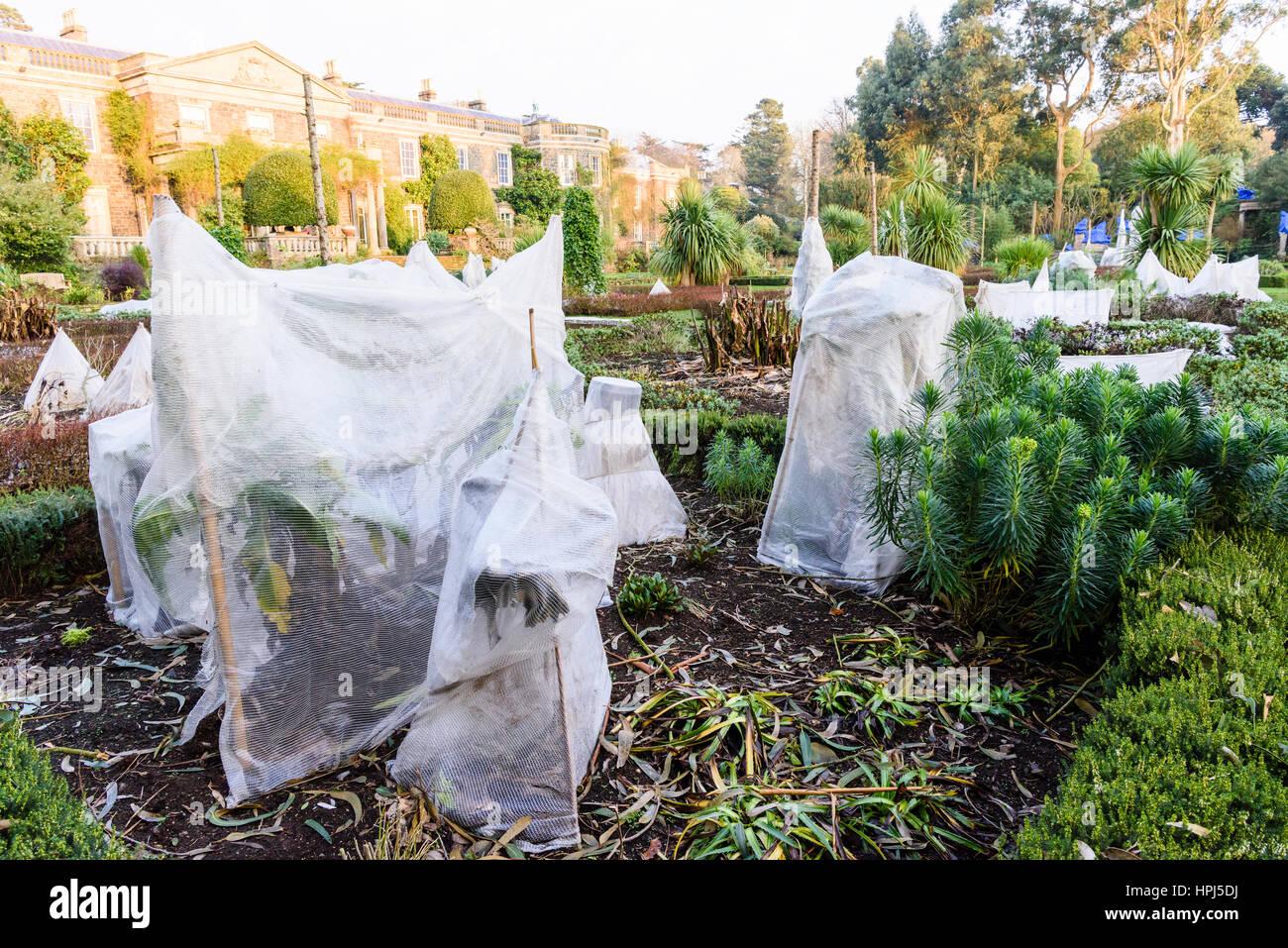 Pflanzen In Einem Formalen Garten Bedeckt Mit Stroh Und Vlies Zum Schutz  Gegen Winterfrost.