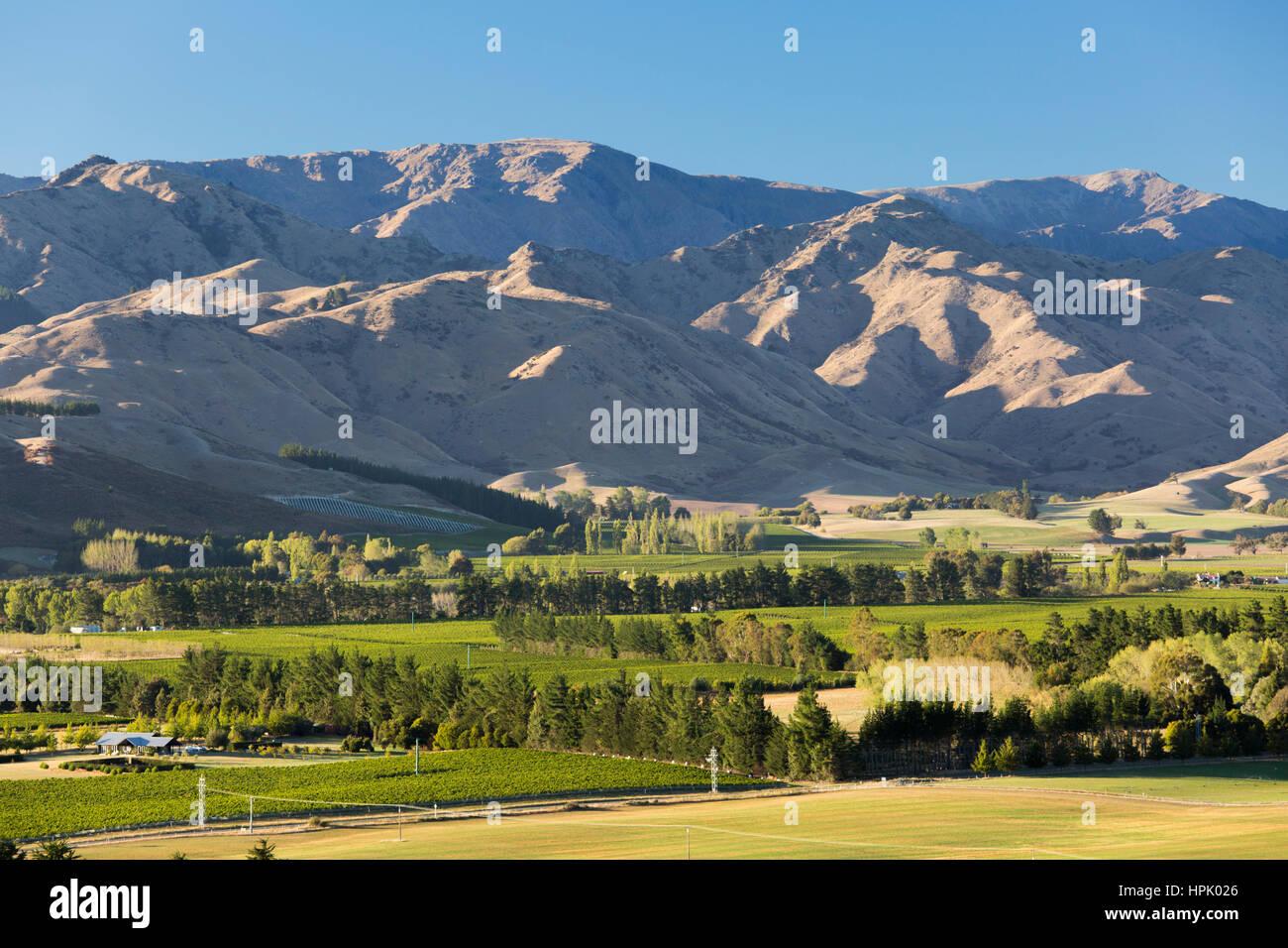 Blenheim, Marlborough, Neuseeland. Blick über Weinberge im Wairau Valley auf die trockenen Hänge des Wither Hills. Stockfoto