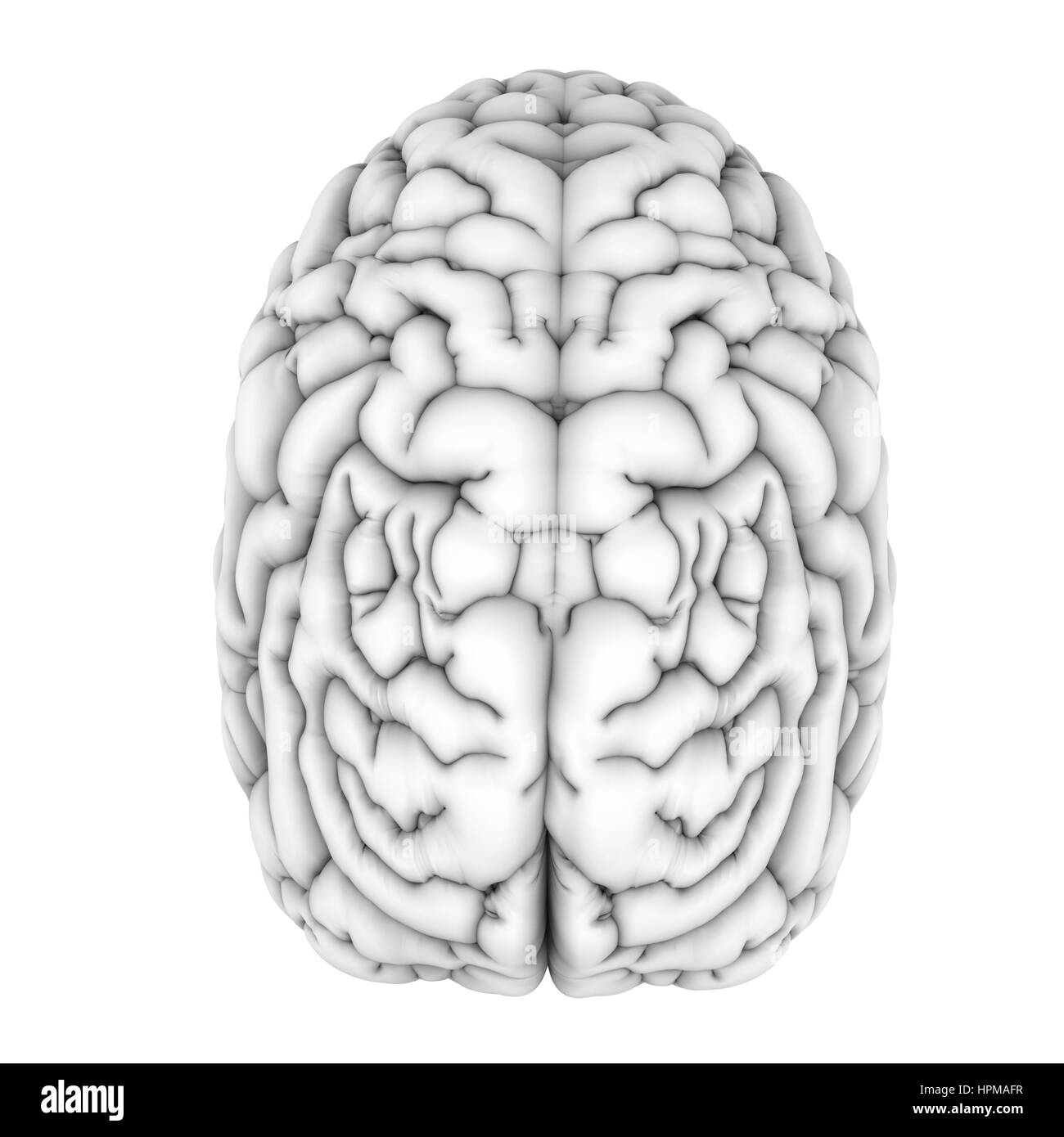 Großzügig 3d Gehirn Anatomie Interaktiv Ideen - Anatomie Ideen ...
