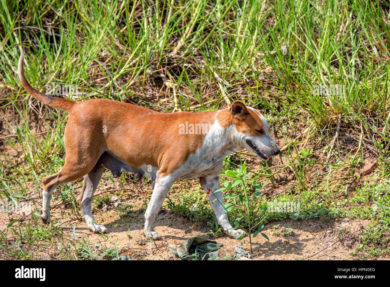 Streunender Hund läuft auf Laub Hintergrund Stockfoto