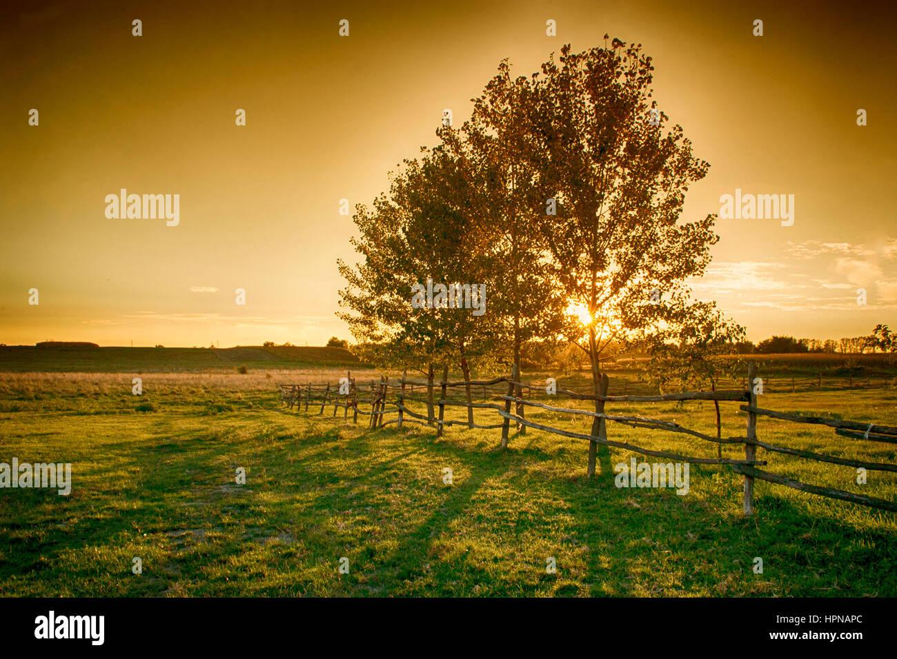 Ackerland im Sonnenuntergang Stockbild
