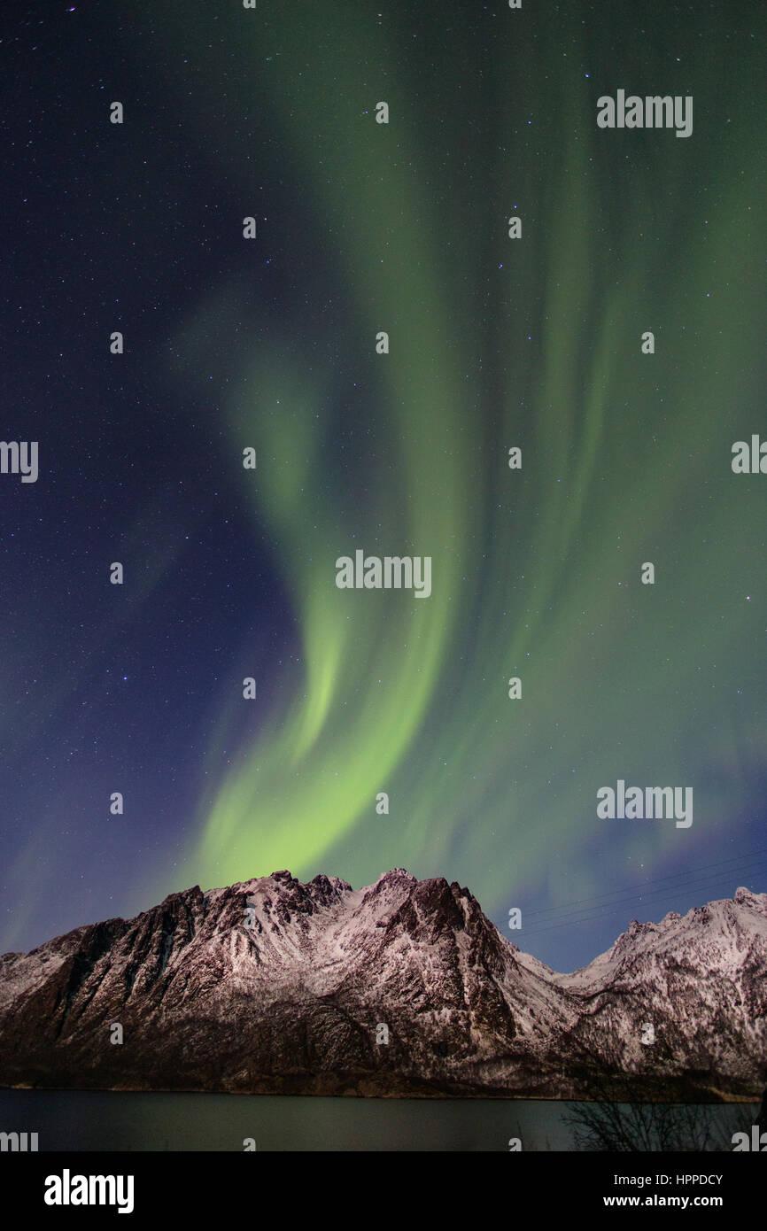Aurora Borealis über Lofoten Inseln, Norwegen, Europa Stockbild