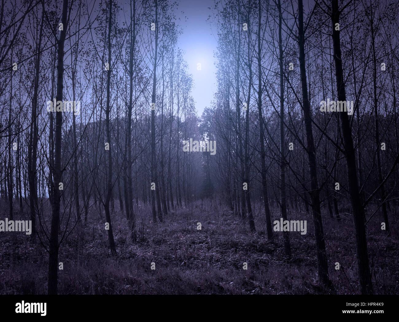 Gruselige Wald Stockbild