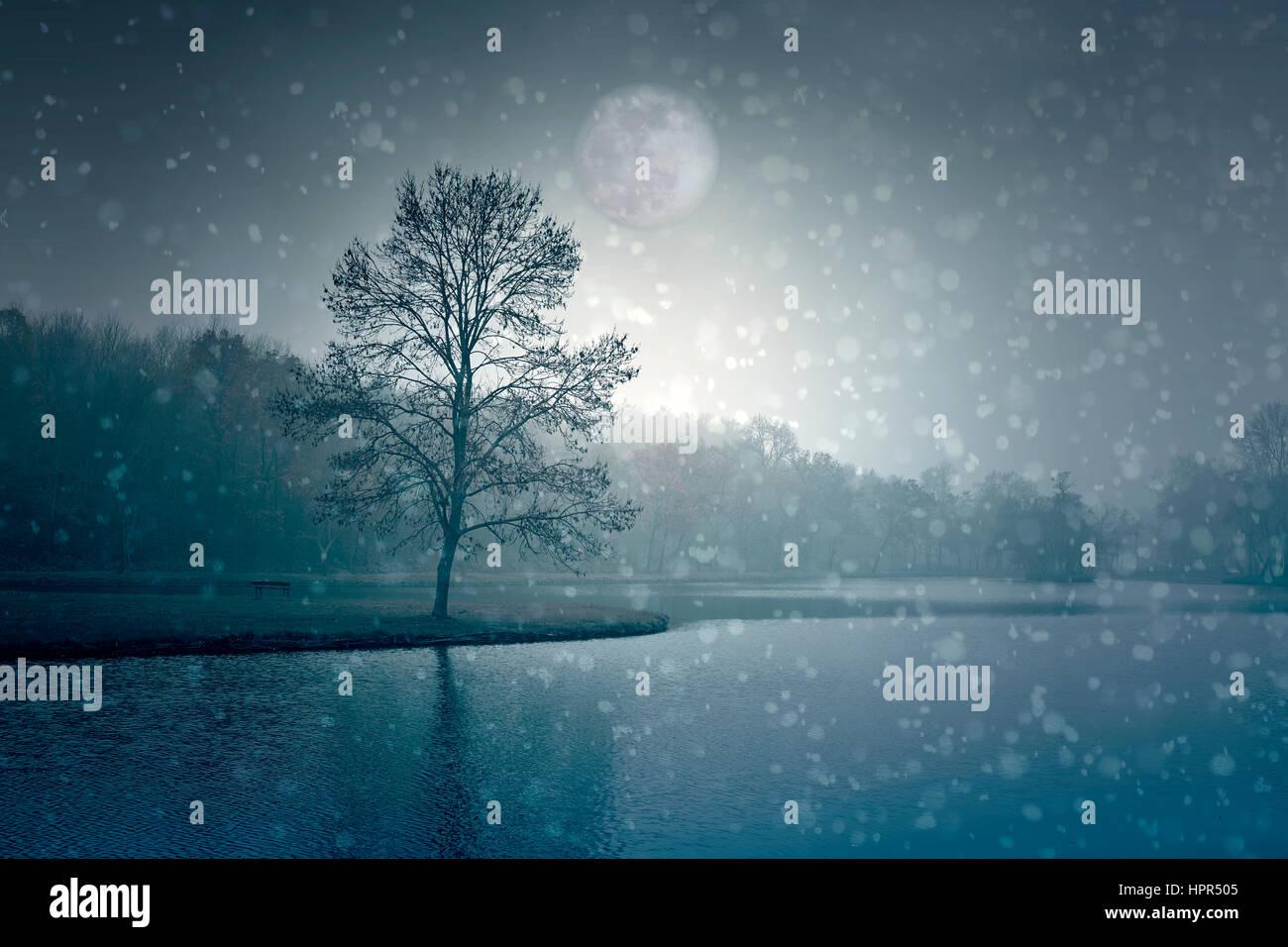Mond und Wald Stockbild