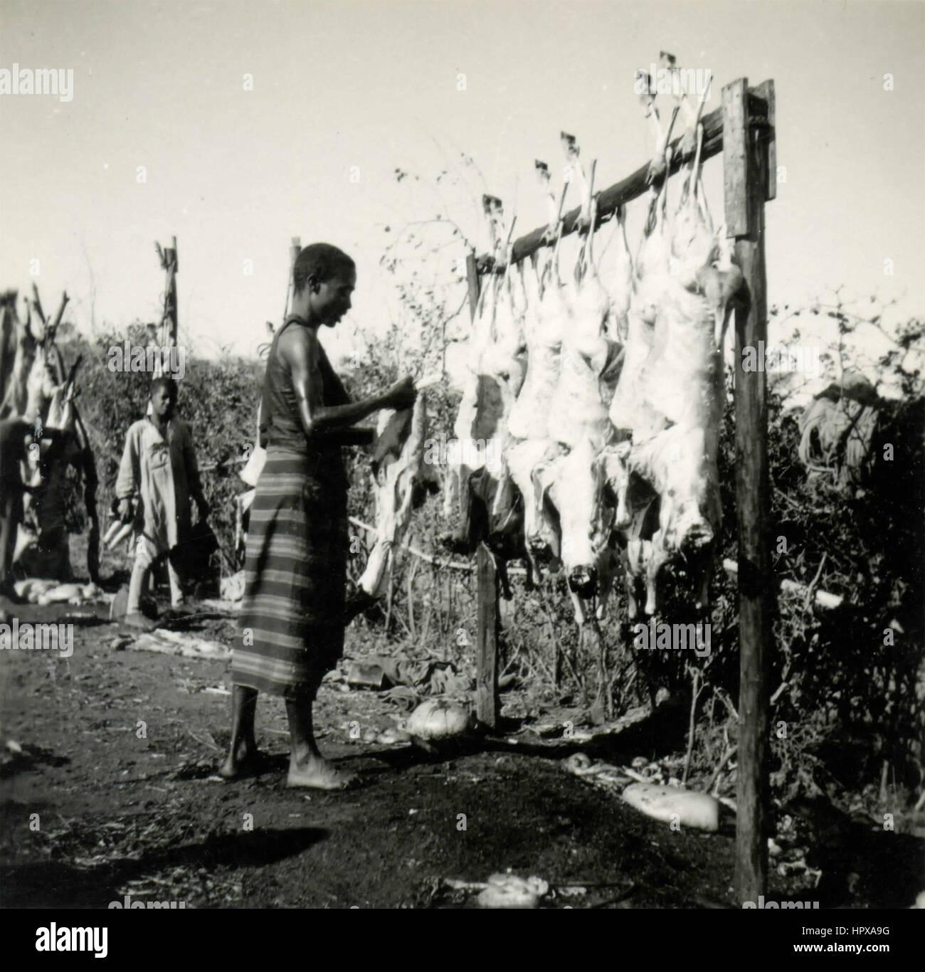 Vorbereitung der Tiere gefangen, Harar, Äthiopien Stockbild