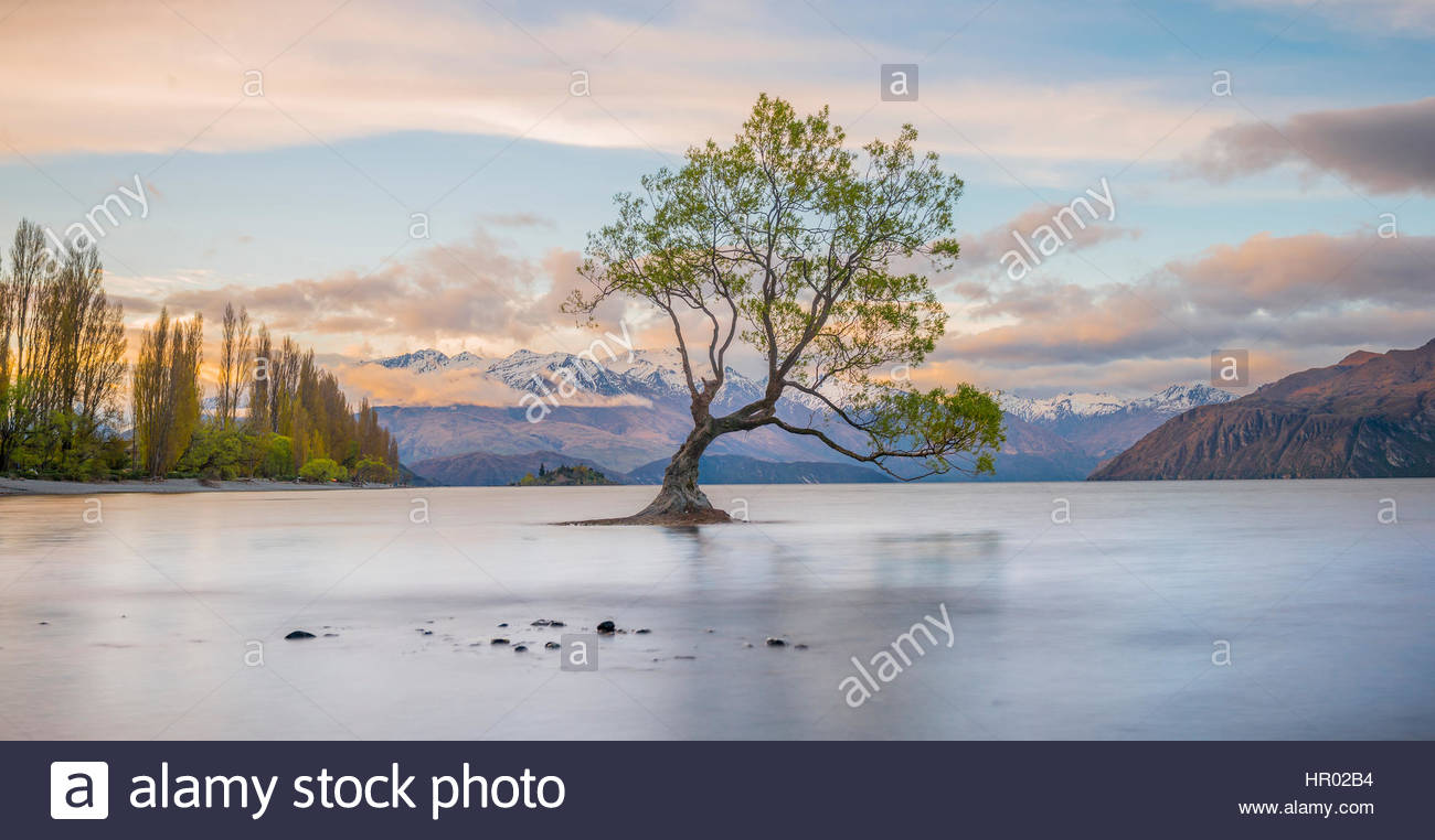 Sunrise, einziger Baum stehend im Wasser, Lake Wanaka, The Tree in Wanaka, Roys Bay, Otago Southland, Neuseeland Stockbild
