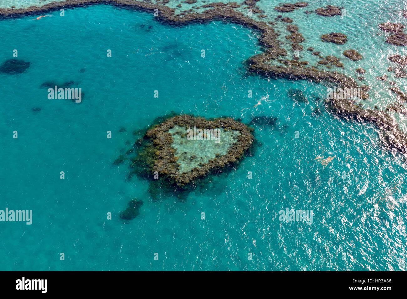 Korallenriff, Heart Reef, Teil von Hardy Reef, Outer Great Barrier Reef, Queensland, Australien Stockbild