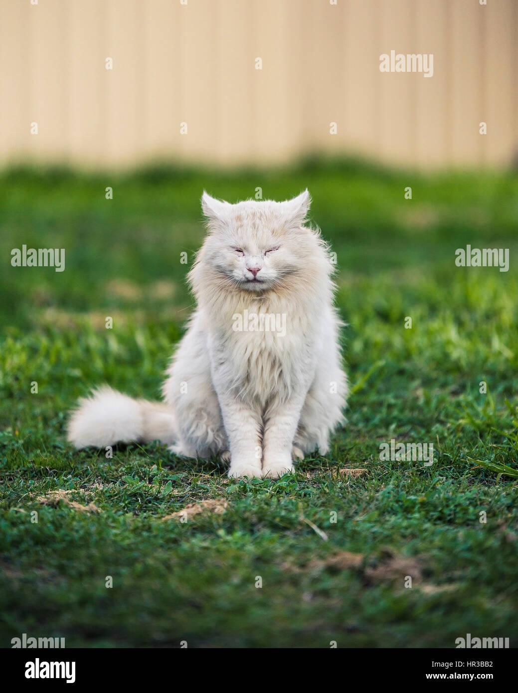 Garten Katzen Stockbild