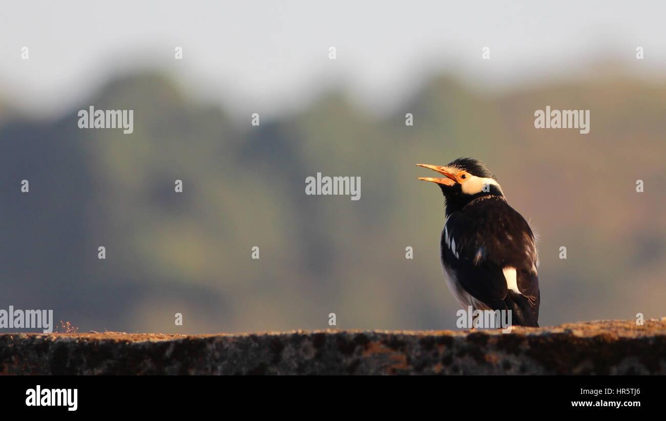 Vögel des indischen Subkontinents - Lets fly away mit schönen & lebendige Arten der Welt... Stockbild