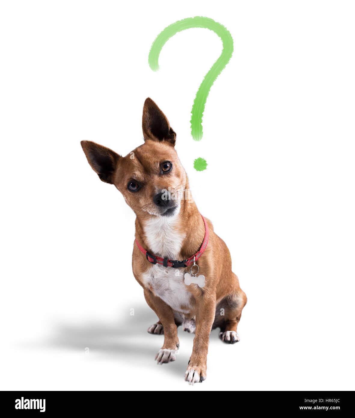 Hund mit fragenden Ausdruck Stockbild