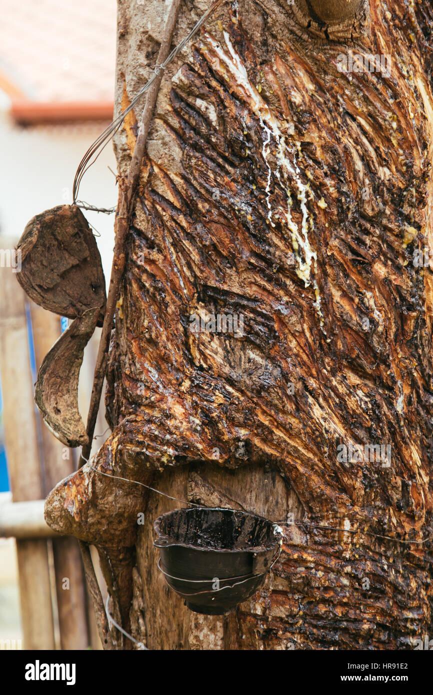 rubber tapper stockfotos rubber tapper bilder alamy. Black Bedroom Furniture Sets. Home Design Ideas