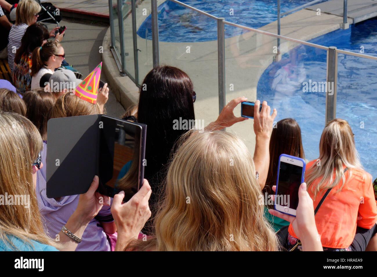 Menschen, die das Fotografieren der Dichtungen in Quebec Aquarium mit Smartphones und tablets Stockbild