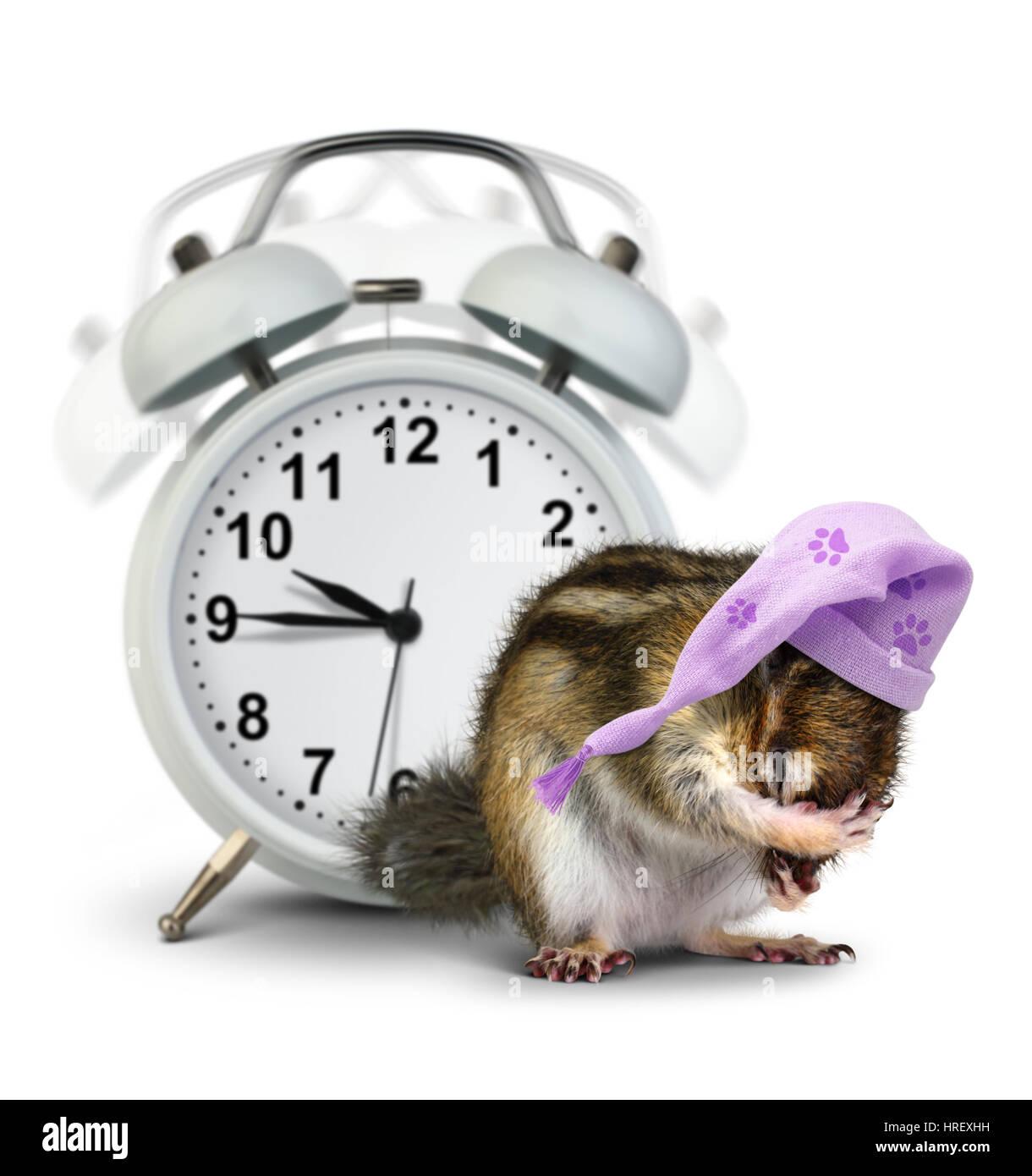 Guten Morgen Konzept Lustige Tier Streifenhörnchen Mit Uhr Klingeln