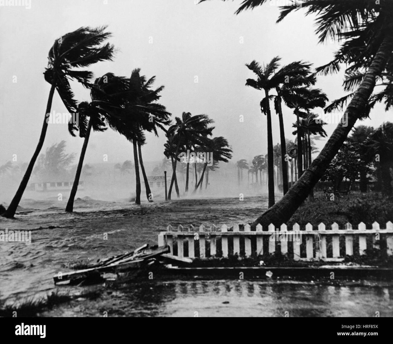 Hurrikan in Palm Beach Stockbild