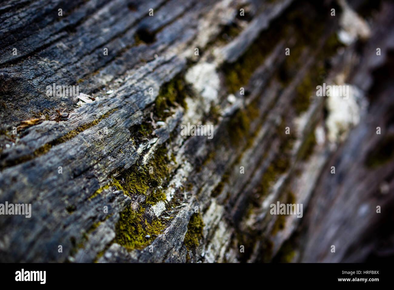 Baumstamm - Struktur Stockbild