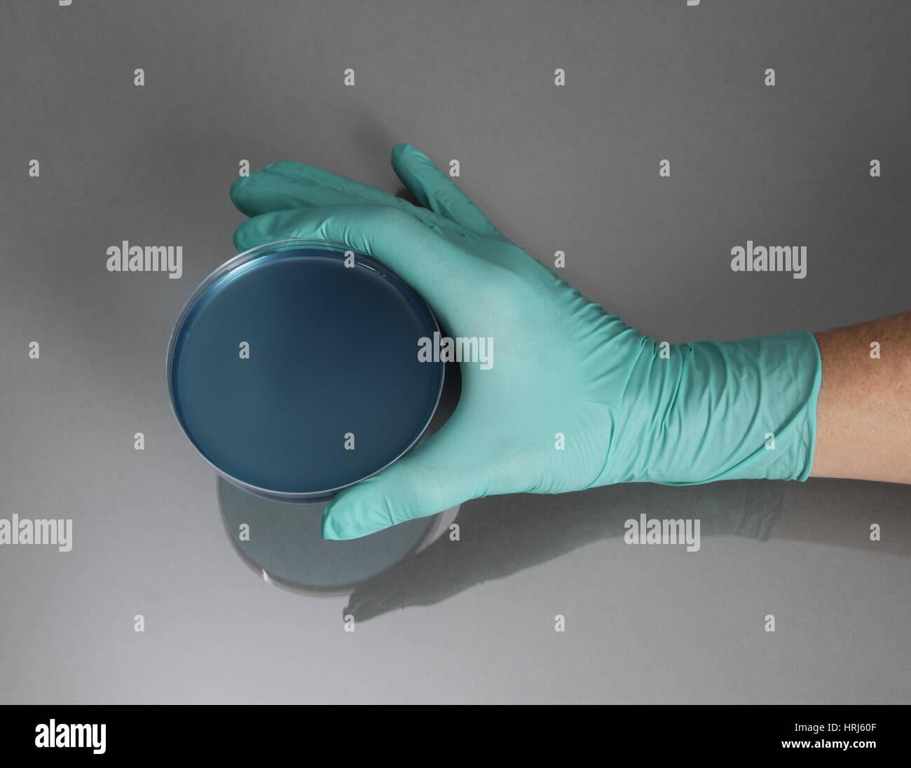 Hand, die Petrischale Stockfoto