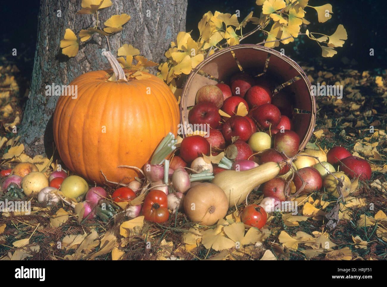 Herbst-Stilleben Stockbild
