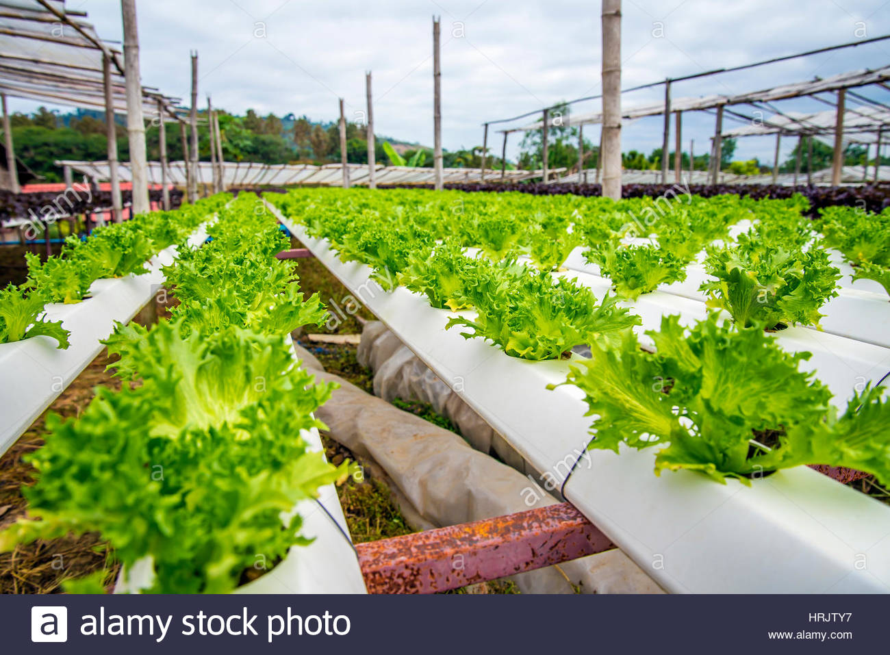 hydroponic vegetable production Horticulture associate professor neil mattson initiated a course in the fall on  hydroponic food crop production and management to teach the.